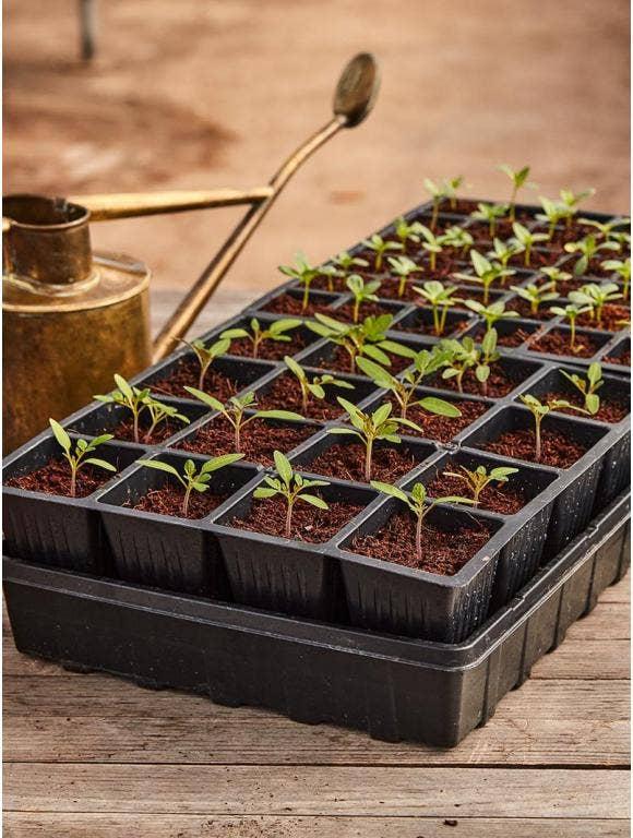 Burpee Self-Watering Seed Starting Kits