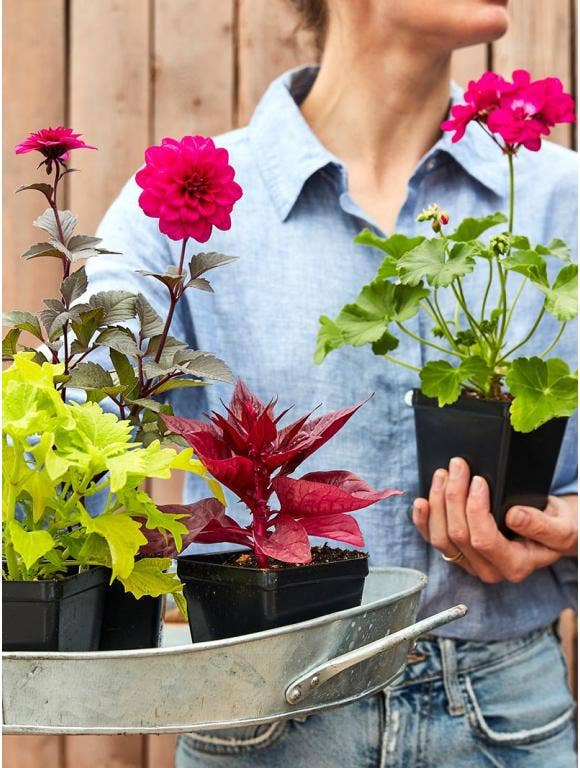 Your Flower Plants Are Here – What Next?