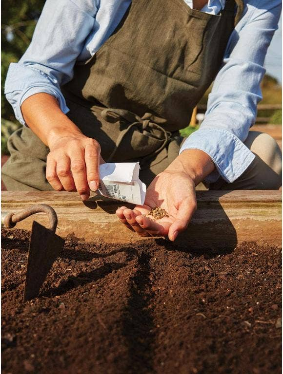 How to Direct Sow Seeds