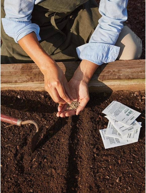 Direct Sow Seeds
