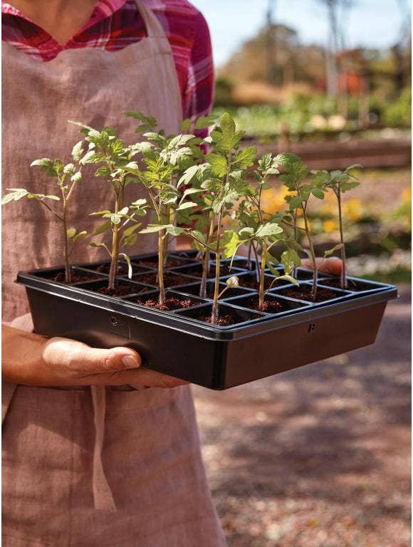 Hardening Off Your Seedlings