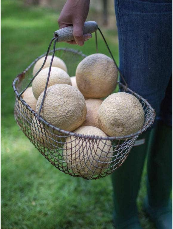 Walking in the garden with a basket of melons