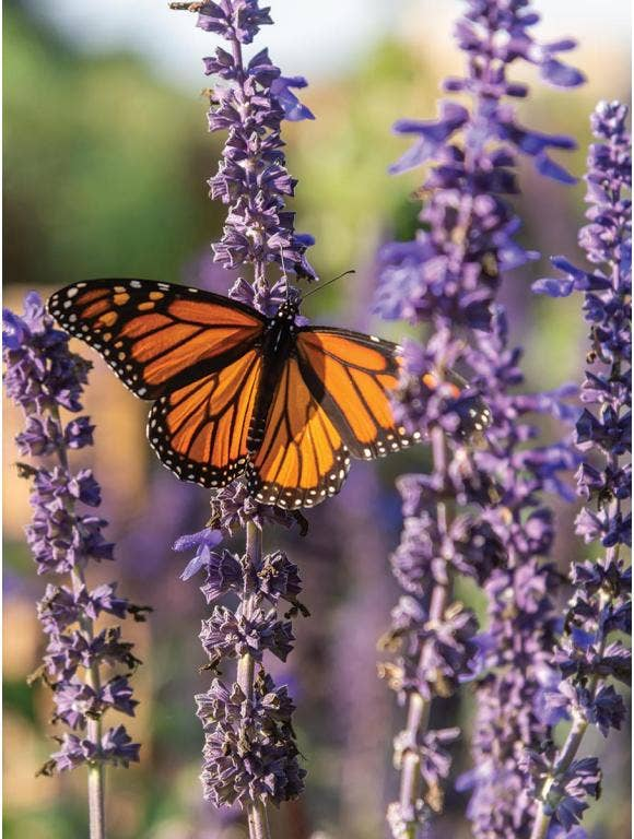 Pollinators and Our Gardens - Birds, Bees, Butterflies and More