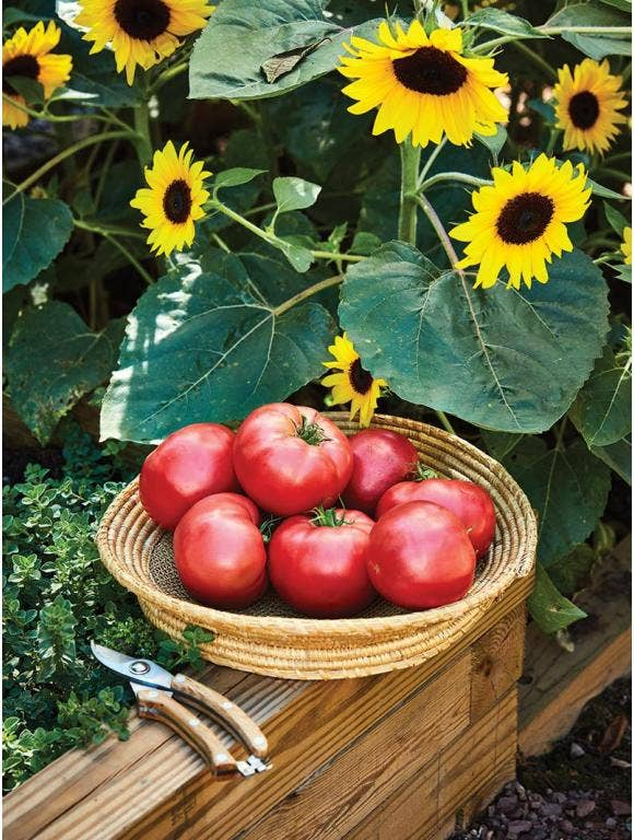Growing Vegetables and Flowers in Harmony