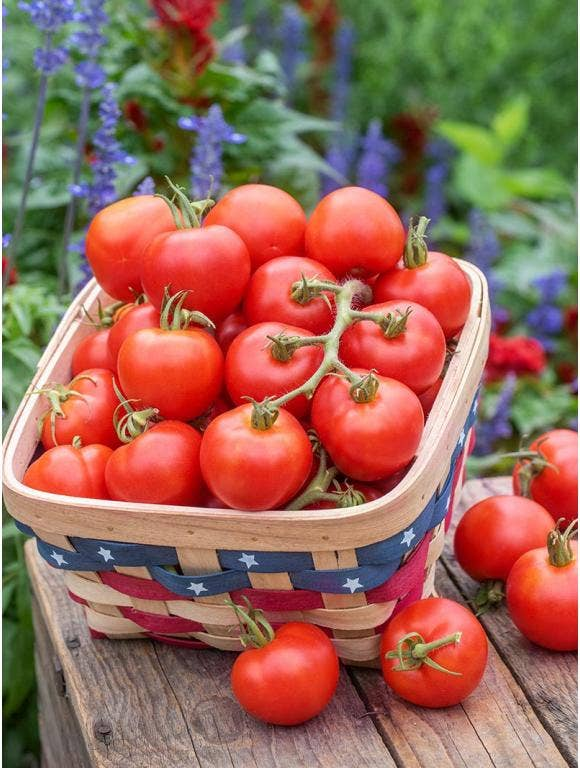 Top 10 Tomato Solutions