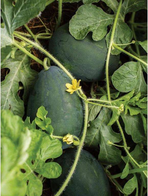 Tips for Growing Fruits and Vegetables Together in Your Garden