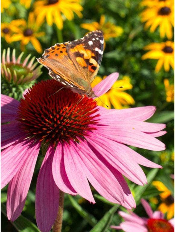 The Basics of Pollinator Garden Design
