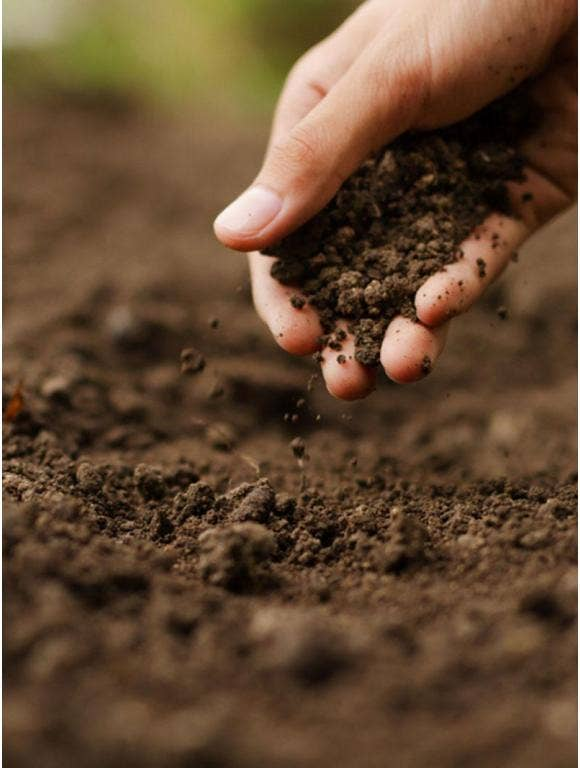 Understanding the Importance of Soil and All It Does for Your Garden