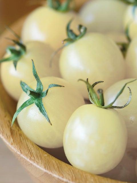 Tomato, Italian Ice Hybrid