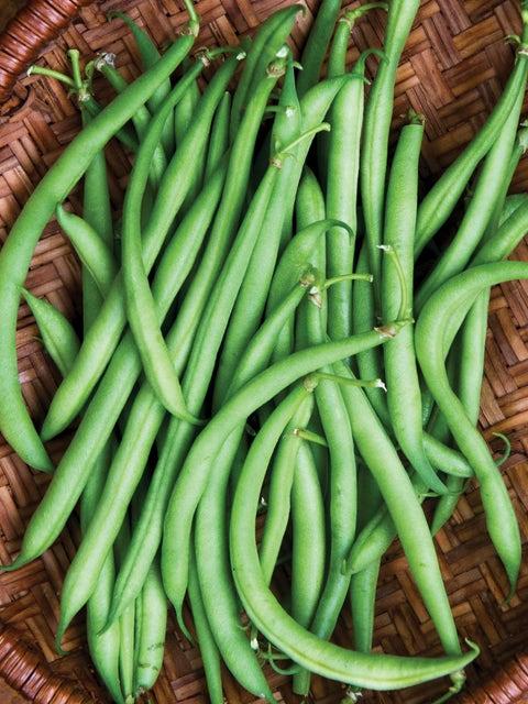Bean, Mascotte