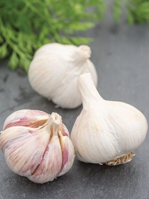 Garlic, Romanian Red