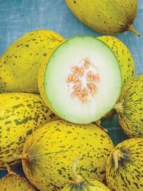 Melon, Whatamelon Hybrid