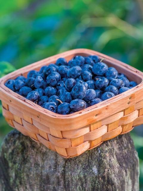 Blueberry, Razz