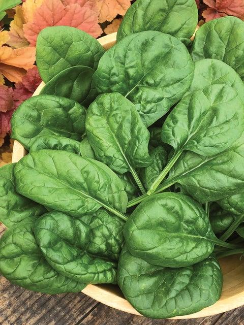 Spinach, Harmony Hybrid