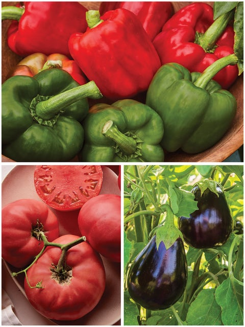 Heirloom Vegetable Plants Gift Collection