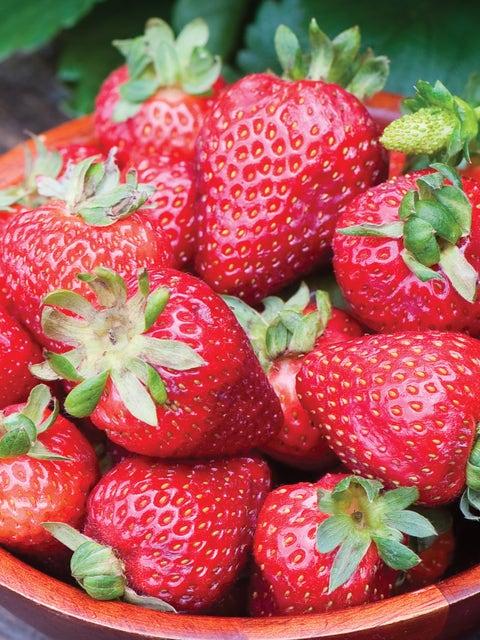 Strawberry, Seascape