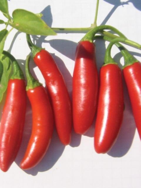 Pepper, Hot, Serrano Tampiqueno
