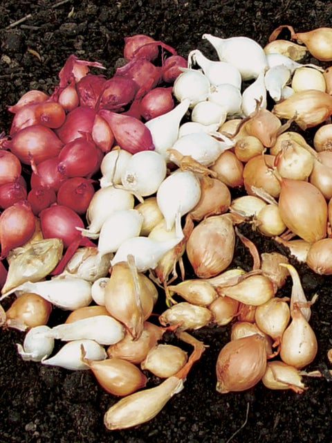 Onion Collection, Sets
