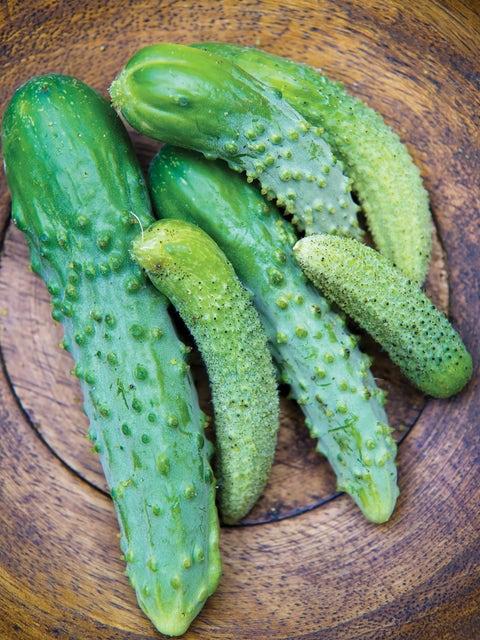Cucumber, Parisian