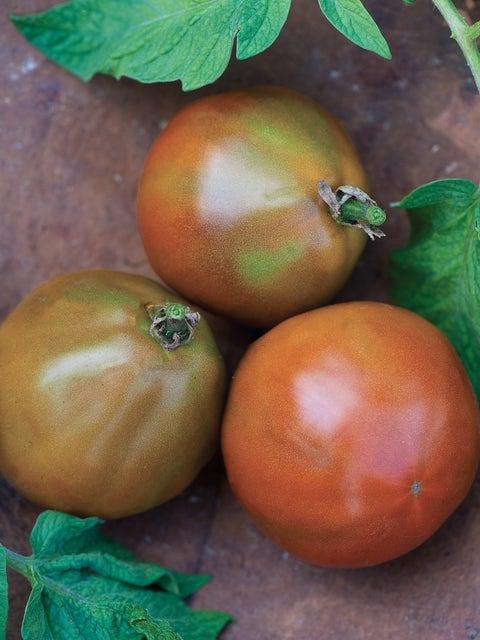 Tomato, Black Truffle