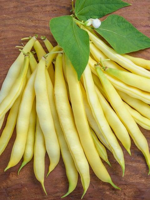 Bean, Bush, Golden Wax Organic