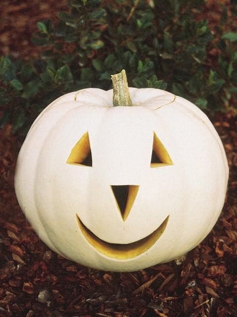 Pumpkin, Lumina