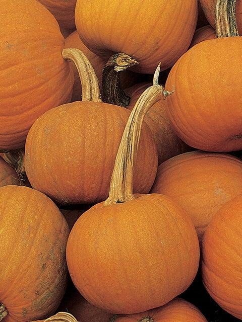 Pumpkin, Early Sweet Sugar Pie