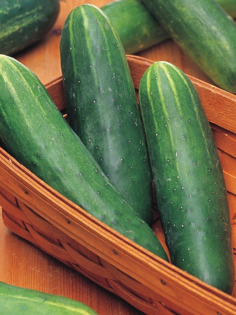 Cucumber, Double Yield Organic