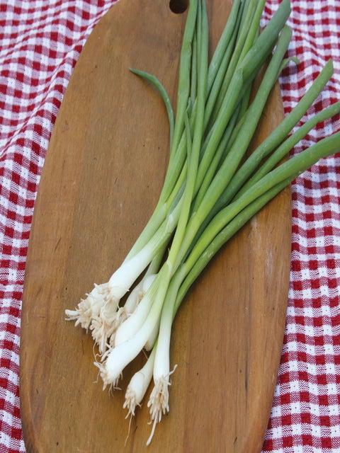 Bunching Onion, Tokyo Long White
