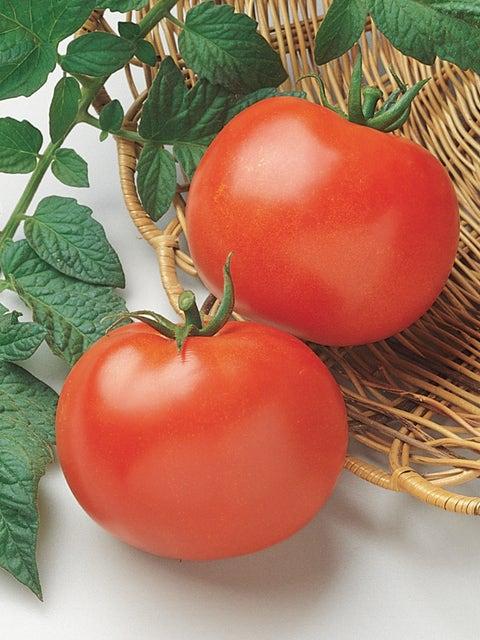 Tomato, Rutgers