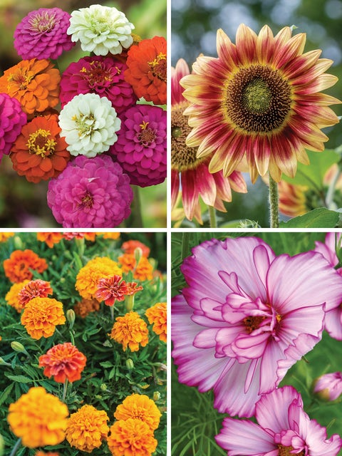Easy to Grow Flower Collection