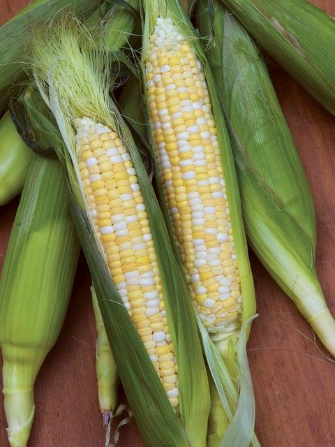 Corn, King Kool Hybrid
