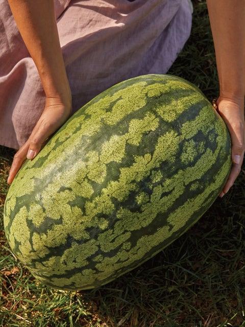 Watermelon, Carolina Cross  #183