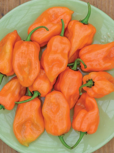 Pepper, Hot, Habanero