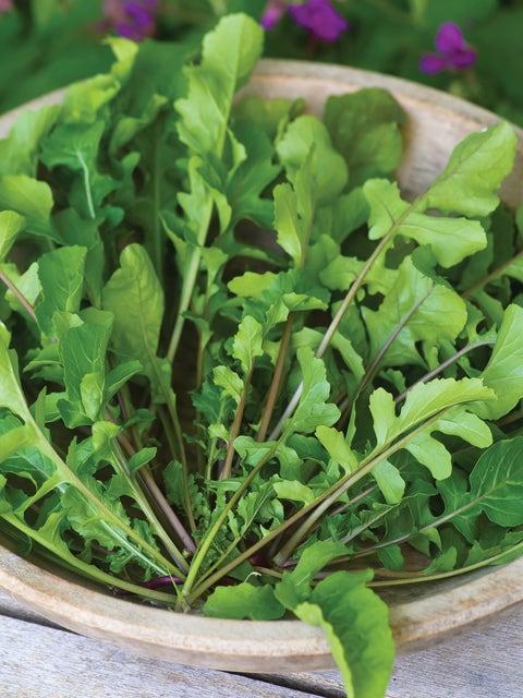 Arugula, Selvatica Organic