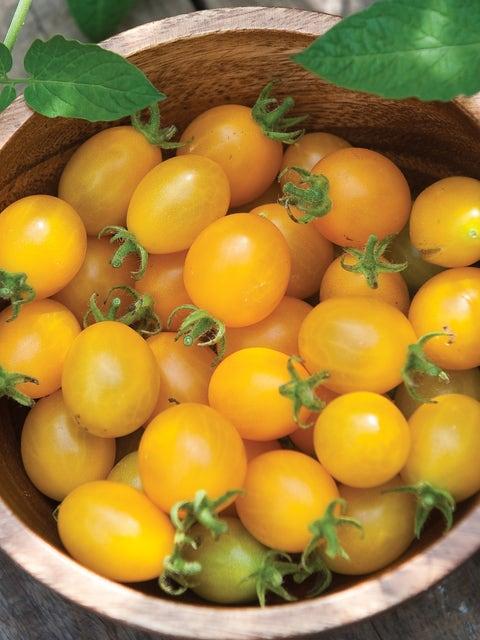 Tomato, Mirabelle Blanche Organic