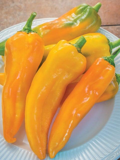 Pepper, Sweet, Mama Mia Giallo Hybrid