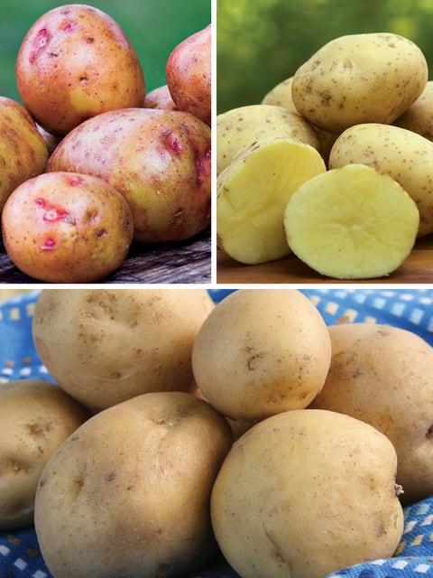 Potato, All Season Collection