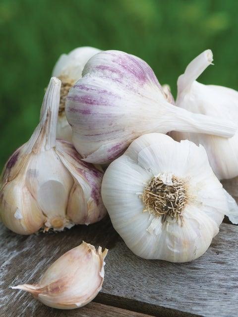 Garlic, Burpees Best Spring Collection
