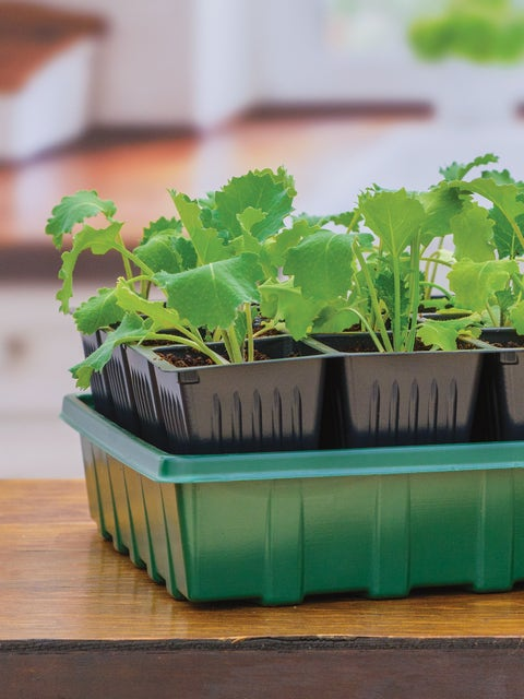 32 XL Cell Self-Watering Ultimate Growing System