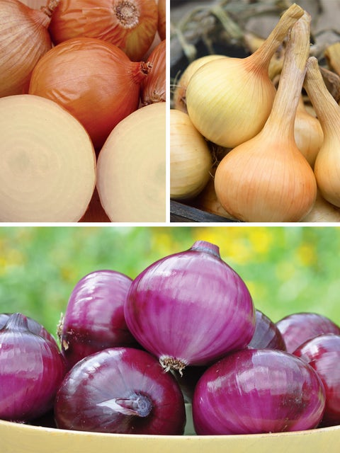 Onion, Mixed Plants Collection