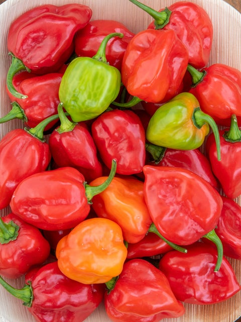 Pepper, Hot, Caribbean Red