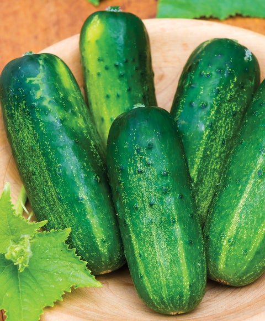 Cucumber, Supremo Hybrid