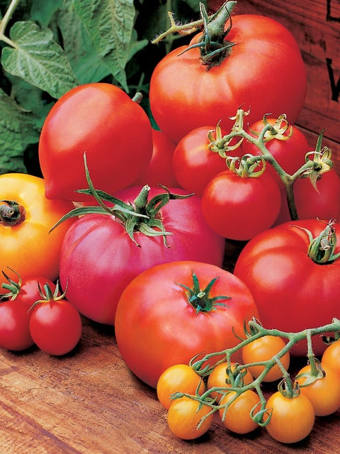 Tomato Collection, Burpees Hall Of Fame