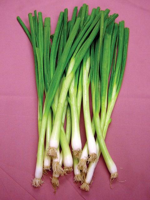 Bunching Onion, White Lisbon