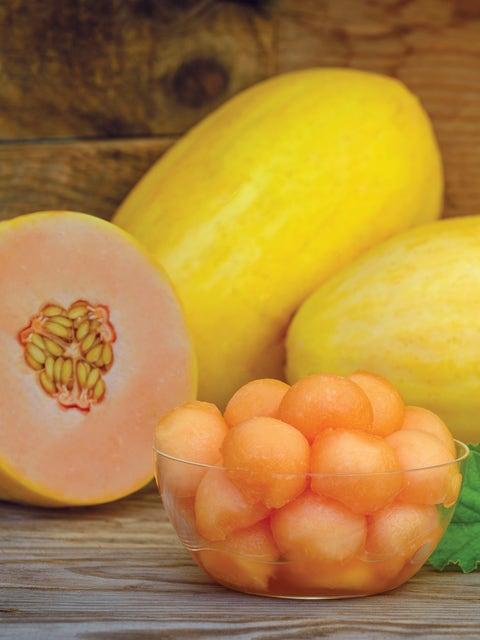 Melon, Mango Hybrid
