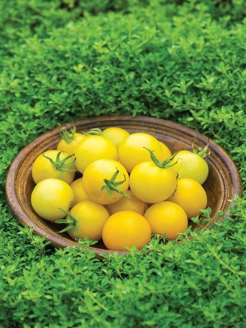 Tomato, Honey Delight Hybrid