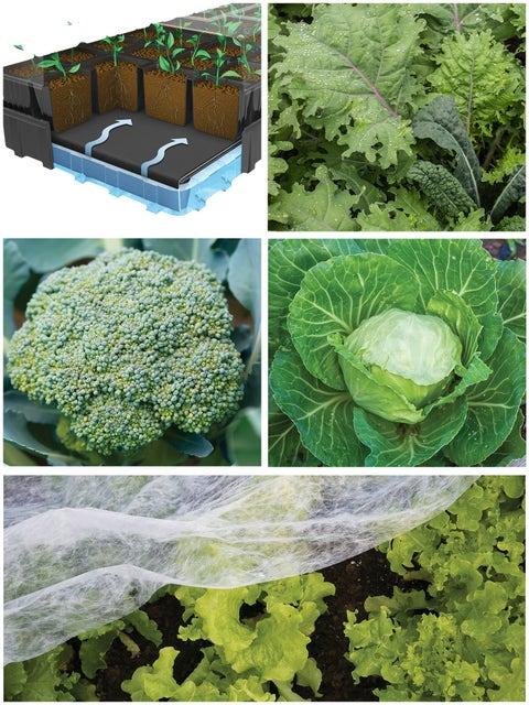 Fall Vegetable Success Kit