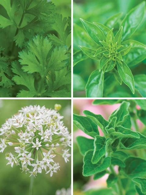 Four Fabulous Herbs