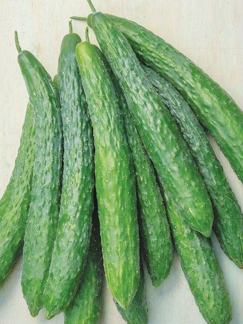 Cucumber, Dragon Suhyo Hybrid